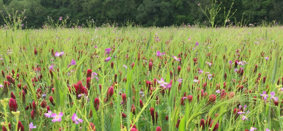 Wildbird Mixtures – Making A Difference for Farmland Birds