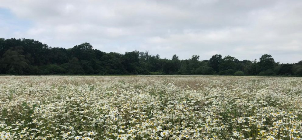 What is a Wildflower Meadow?