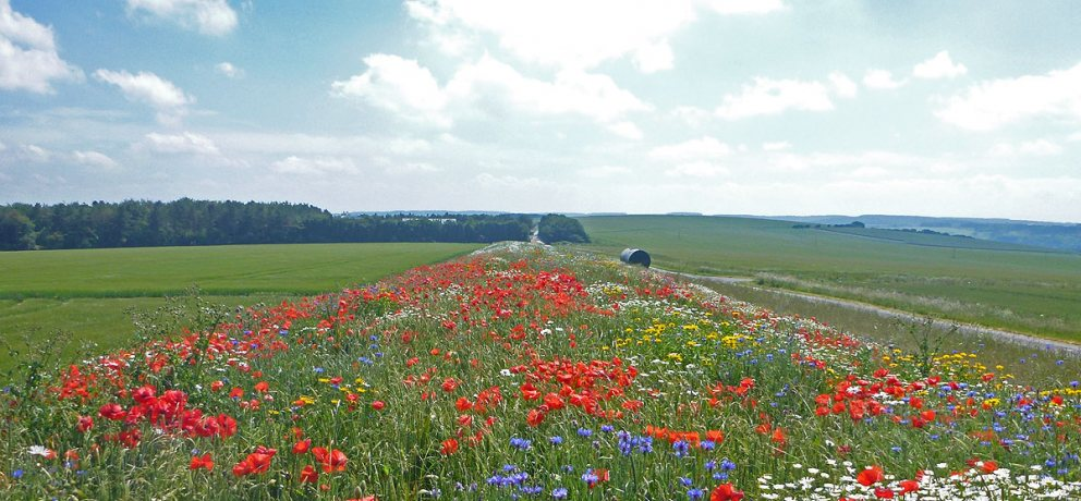 Carbon Offsetting with Wildflowers