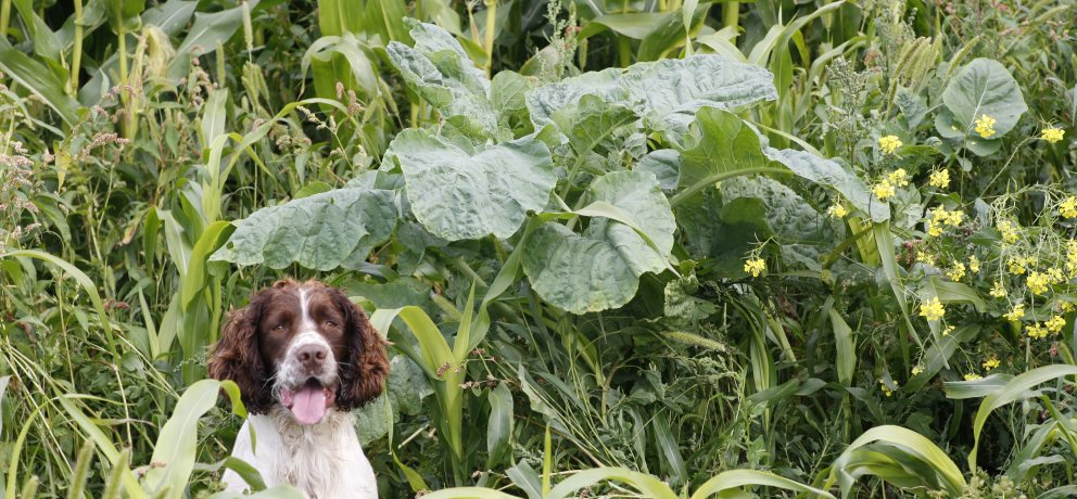 Gundog Mixtures – Special Mixtures for Gun Dog Training