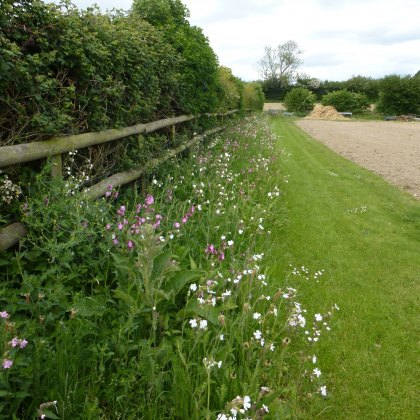 Hedgerows, Margins & Shaded Area